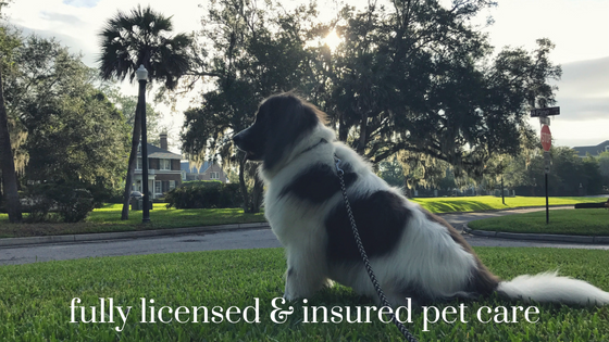 Pet Sitting Service in Jacksonville | Dog Walkers